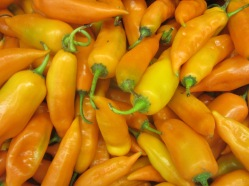 aji_amarillo_pepper